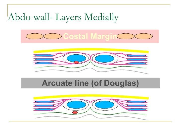 Principles of abdominal anatomy