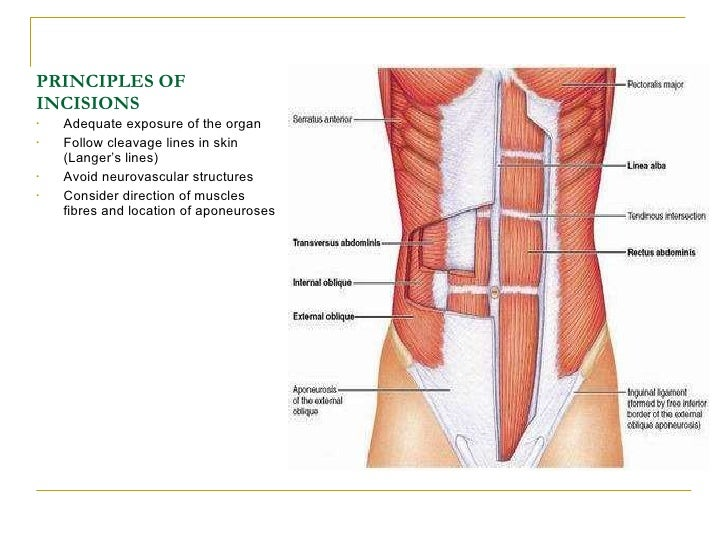 Principles Of Abdominal Anatomy