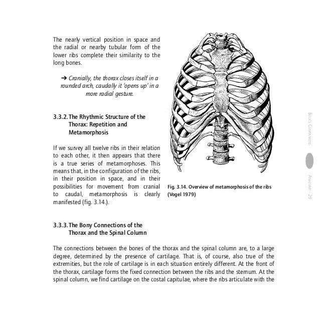 Anatomy Human Morphology From A Phenomenological Point Of View