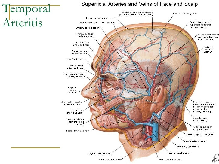 Anatomy Lect 3 Head & Neck