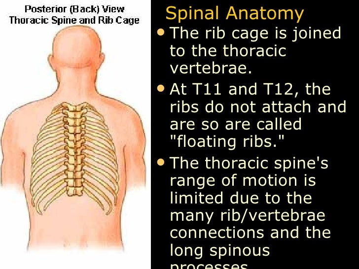 Anatomy Lect 5 Trunk & Spine