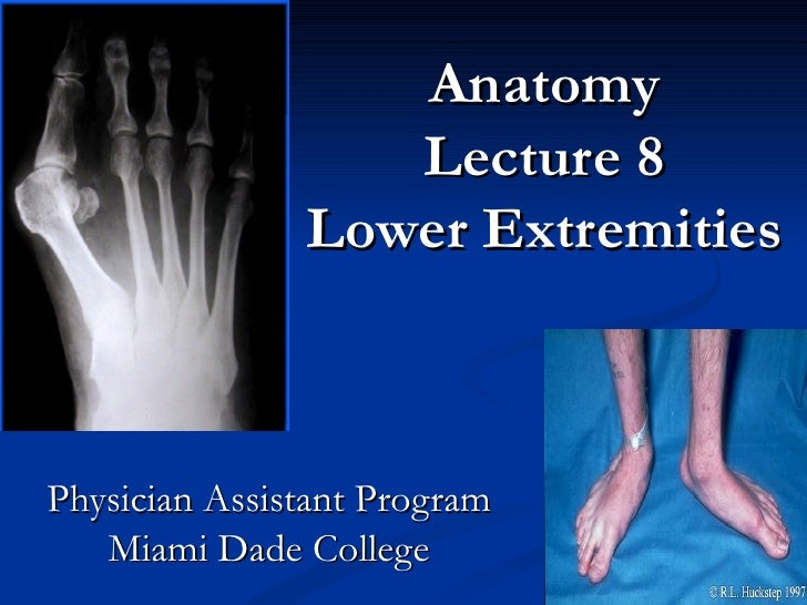 Anatomy Lecture 8 Lower Extremities Physician Assistant Program Miami Dade College