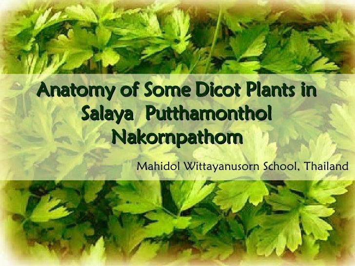 Anatomy of Some Dicot Plants in Salaya  Putthamonthol Nakornpathom Mahidol Wittayanusorn School, Thailand