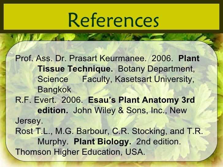 Anatomy Of Some Dicot Plant In Salaya Putthamonthon Nakhonpathom