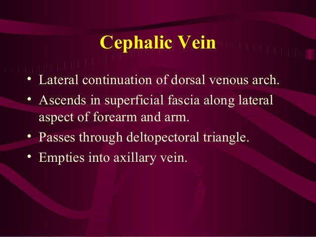 anatomy of the arm (detailed), Cephalic Vein