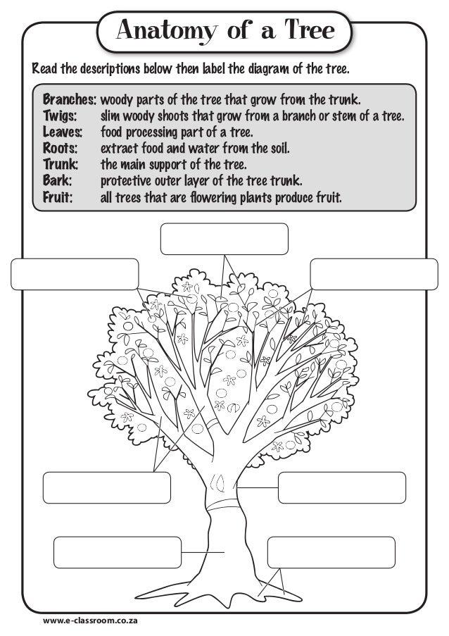 anatomy of tree  tree trunk diagram label #15
