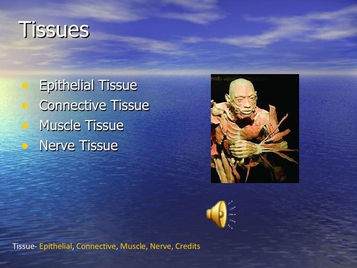 Tissues <ul><li>Epithelial Tissue </li></ul><ul><li>Connective Tissue </li></ul><ul><li>Muscle Tissue </li></ul><ul><li>Ne...