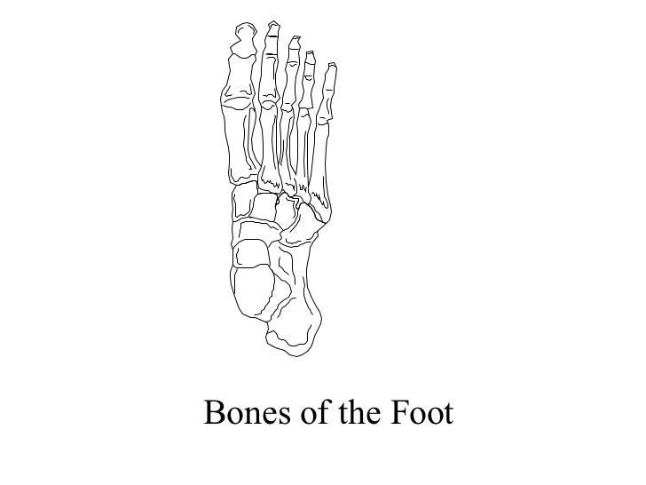 Anatomy Unit 7 Anatomy Of The Skeletal System