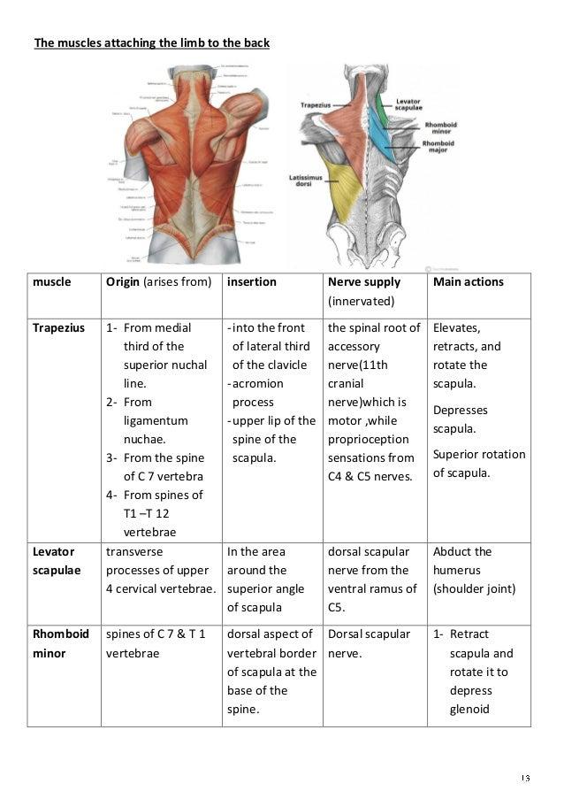 Anatomy upper