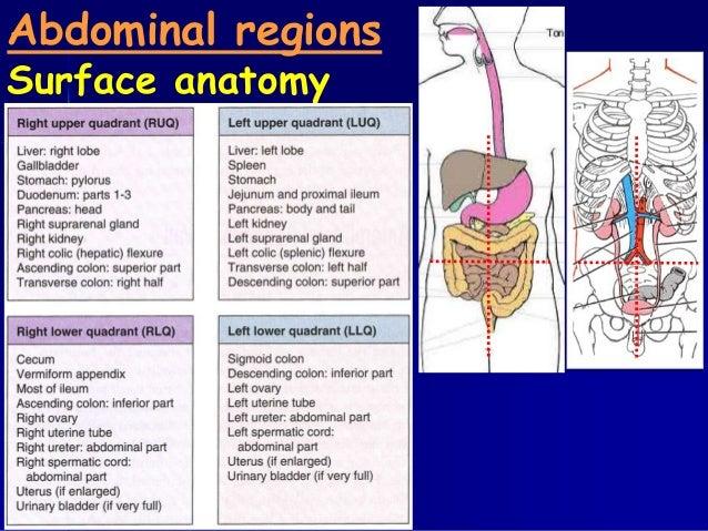 Anatomy 210 abdomen pelvis for semester ii year 2012 2013 abdominal regionssurface anatomy ccuart Image collections