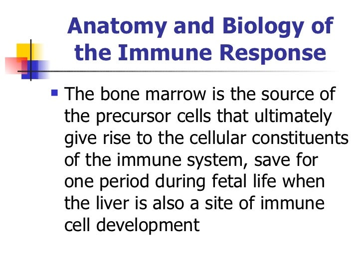 Anatomy and Biology of the Immune Response <ul><li>The bone marrow is the source of the precursor cells that ultimately gi...