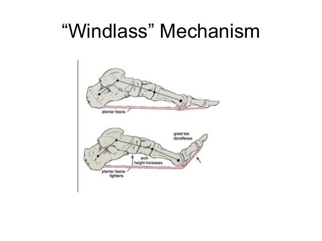 Anatomy And Biomechanics Of The Foot And Ankle Derek Park