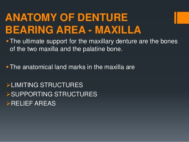ANATOMY OF DENTURE BEARING AREA - MAXILLA The ultimate support for the maxillary denture are the bones of the two maxilla...