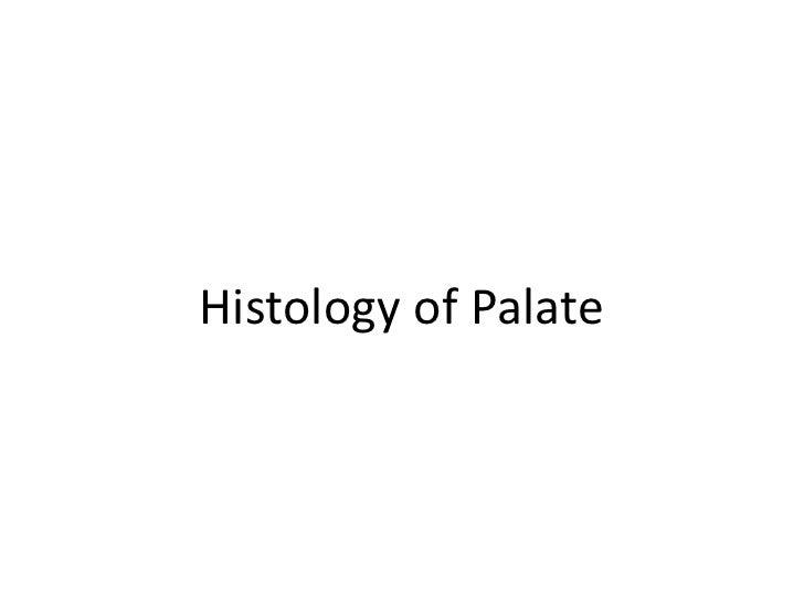 Anatomy And Histology Of Palate