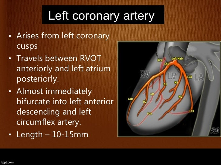 Anatomy And Imaging Of Coronary Artery Disease With
