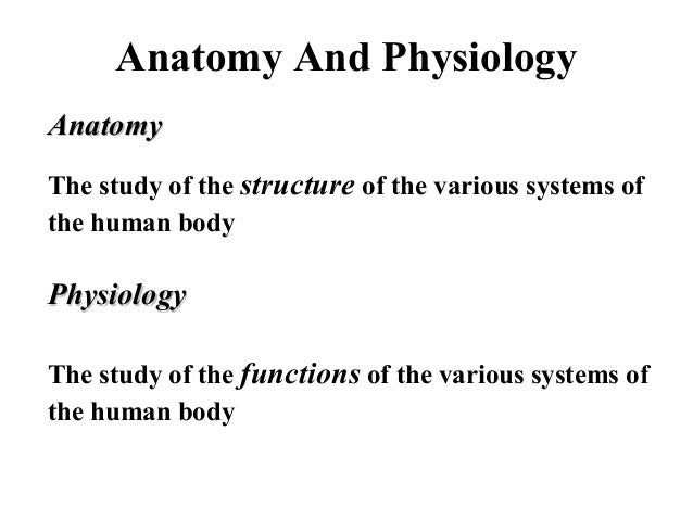 Anatomy And Physiology AnatomyAnatomy The study of the structure of the various systems of the human body PhysiologyPhysio...
