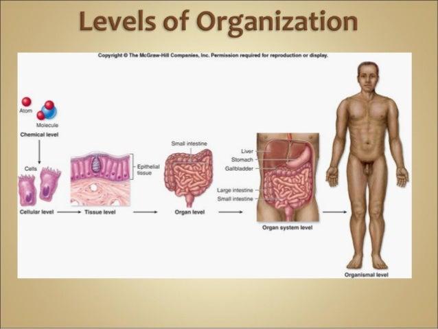 Homework help anatomy and physiology