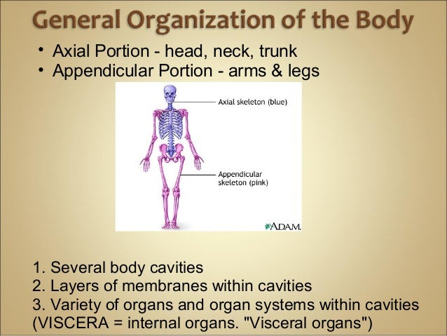 Anatomy and physiology Introduction Chapter 1 Notes