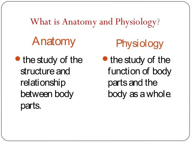anatomy and physiology final(let), Human body