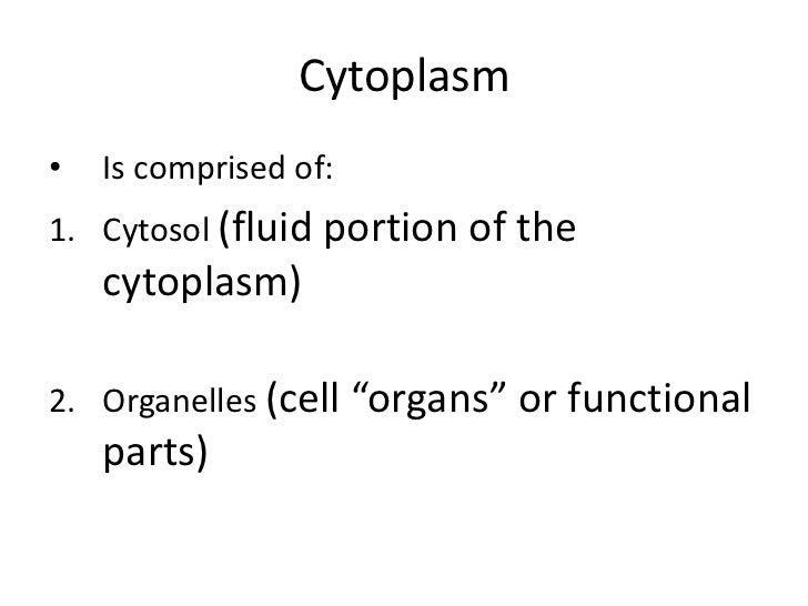 Organelles1. Endoplasmic reticulum (ER)• A network of membrane-bound tunnels   throughout the cytoplasm
