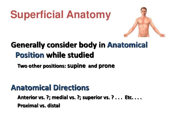 Body Planes• Sagittal plane - Divides the body  into right and left halves.• Transverse (Horizontal) plane -  Divides the ...