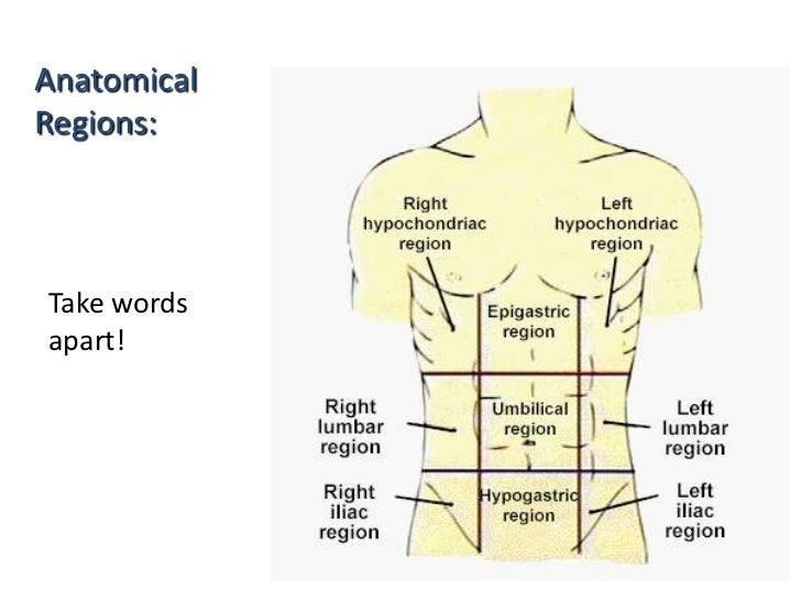 (Anatomy and Physiology for Yoga students - Dr Shashikant (drshashikantsk@gmail.com)
