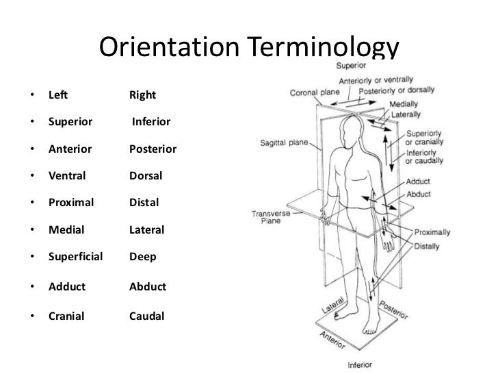 Overview of Anatomy & Physiology• Anatomy – the study of the structure of body  parts and their relationships to one anoth...