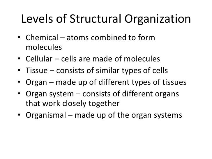 Organ Systems of the Body• Digestive system  – Composed of the oral cavity, esophagus, stomach,    small intestine, large ...