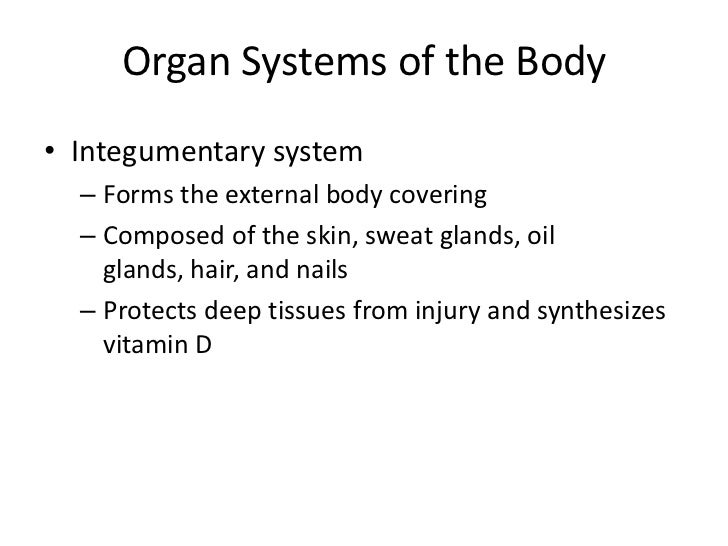 Organ Systems of the Body• Male reproductive system  – Composed of prostate    gland, penis, testes, scrotum, and ductus d...