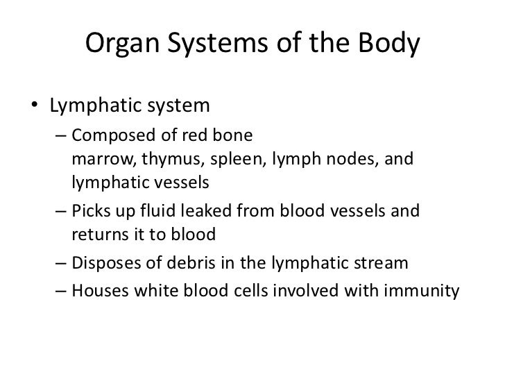 • Organs of Digestive System  – Mouth  – Pharynx (Throat)  – Oesophagus (Food tube)  – Stomach  – Small intestine  – Large...