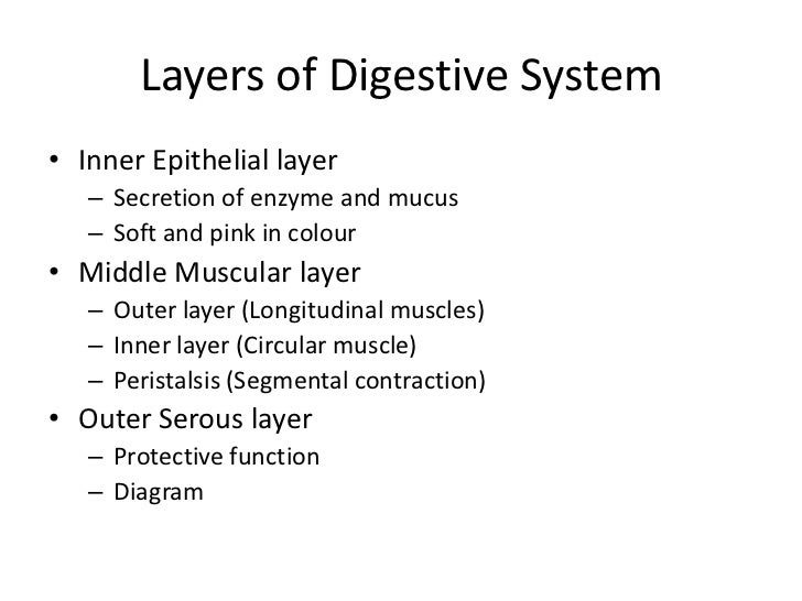 • Large intestine  – 1.5meter long, 5 to 6cm diameter  – Divided into 3 parts     • Right ascending colon     • Transverse...