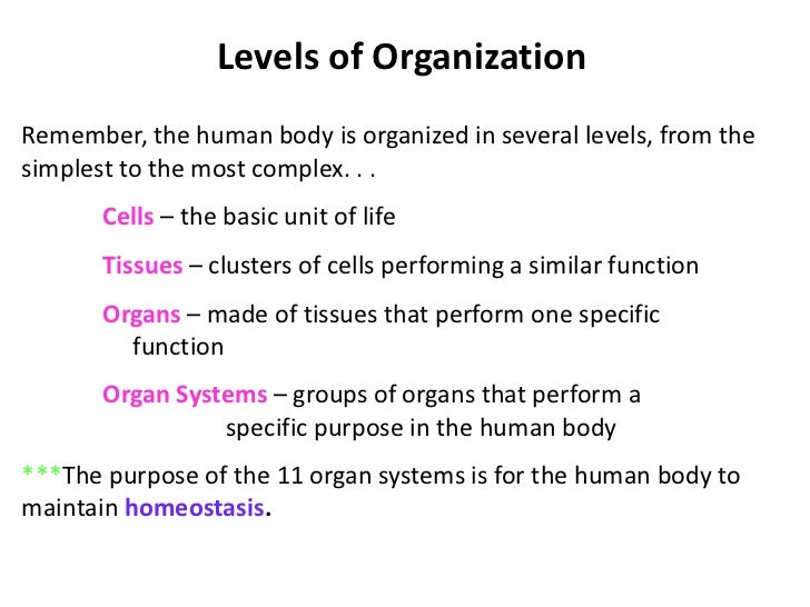 Cell Membrane•   Outer boundary•   Physical•   Chemical•   Comprised of two layers of lipid (fat)    – Outer and inner lay...