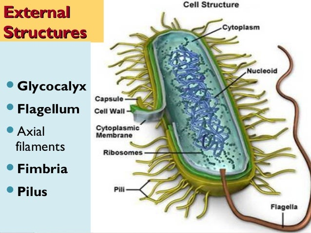 anatomy and physiology of bacteria