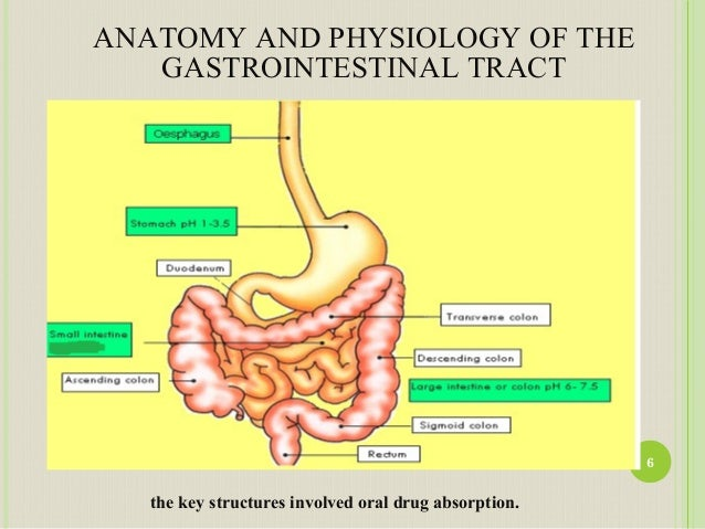 Upper gi anatomy
