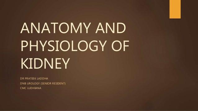ANATOMY AND PHYSIOLOGY OF KIDNEY DR PRATEEK LADDHA DNB UROLOGY (SENIOR RESIDENT) CMC LUDHIANA