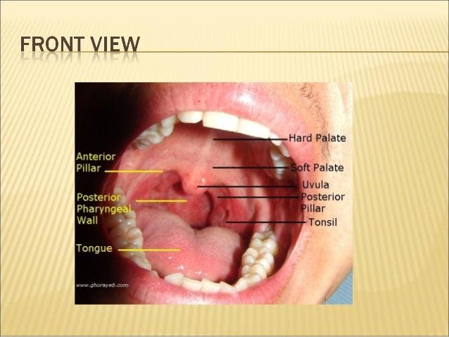 Anatomy and physiology of oral cavity oropharynx waldeyer\'s