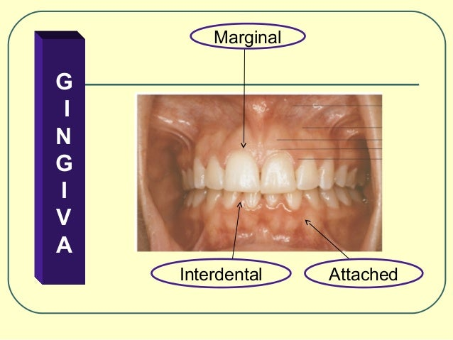 """physiology of periodontal and dental problems essay New dental health care worker """"dental scaling assistant limited periodontal, and dental include: anatomy, physiology, dental anatomy."""