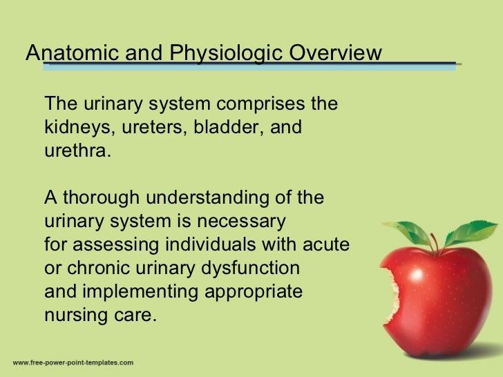 Anatomy and physiology of urinary system