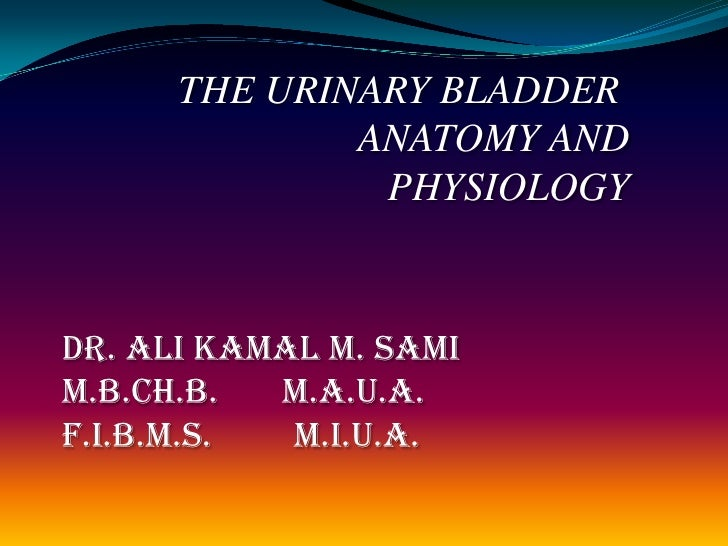THE URINARY BLADDER <br />ANATOMY AND PHYSIOLOGY<br />Dr. Ali Kamal M. Sami<br />M.B.Ch.B.       M.A.U.A.<br />F.I.B.M.S. ...