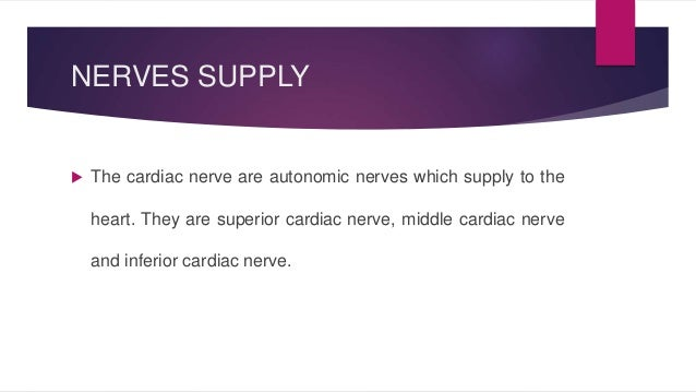NERVES SUPPLY   The cardiac nerve are autonomic nerves which supply to the  heart. They are superior cardiac nerve, middl...