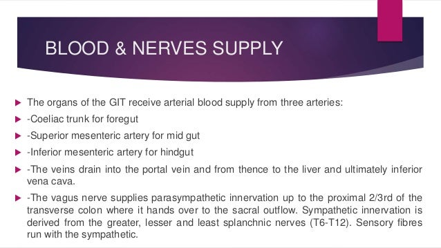 BLOOD & NERVES SUPPLY   The organs of the GIT receive arterial blood supply from three arteries:   -Coeliac trunk for fo...