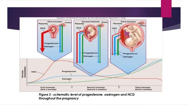 Figure 3 : schematic level of progesterone, oestrogen and HCG  throughout the pregnancy