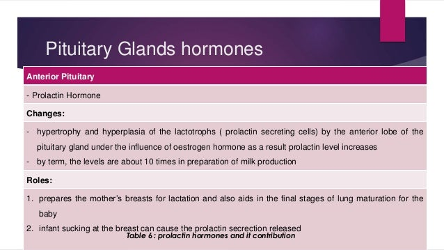 Pituitary Glands hormones  Anterior Pituitary  - Prolactin Hormone  Changes:  - hypertrophy and hyperplasia of the lactotr...