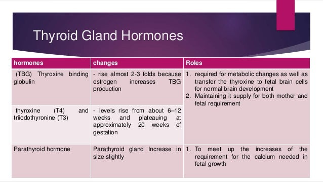 Thyroid Gland Hormones  hormones changes Roles  (TBG) Thyroxine binding  globulin  - rise almost 2-3 folds because  estrog...