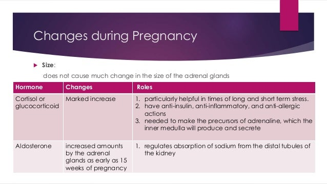 Changes during Pregnancy   Size:  does not cause much change in the size of the adrenal glands  Hormone Changes Roles  Co...