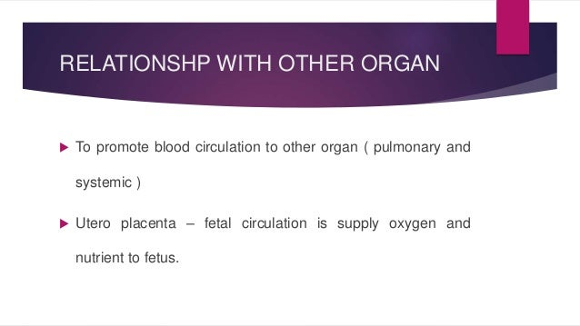 RELATIONSHP WITH OTHER ORGAN   To promote blood circulation to other organ ( pulmonary and  systemic )   Utero placenta ...