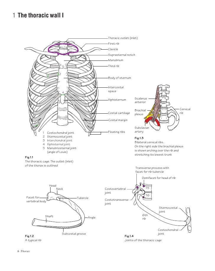 Anatomy ata glance