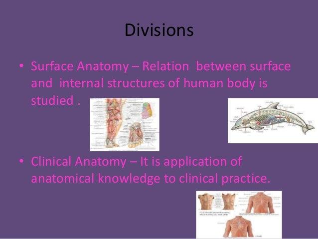 Austin Journal of Anatomy