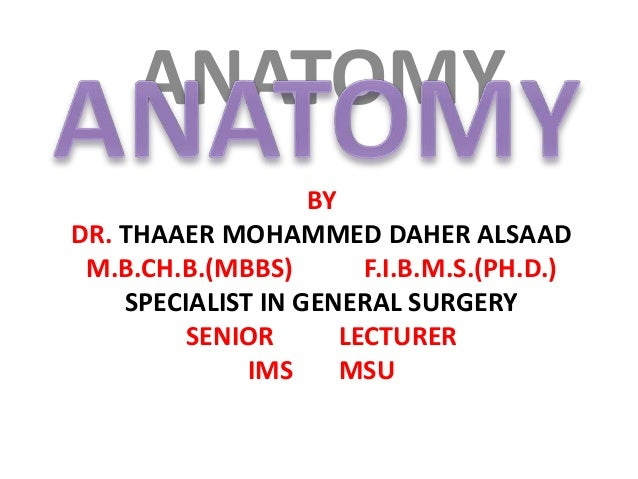 ANATOMY BY DR. THAAER MOHAMMED DAHER ALSAAD M.B.CH.B.(MBBS) F.I.B.M.S.(PH.D.) SPECIALIST IN GENERAL SURGERY SENIOR LECTURE...