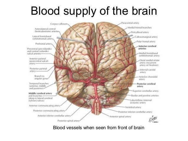 how to stop blood flow to the brain